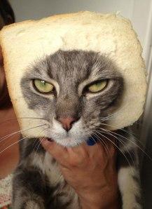 catinbread