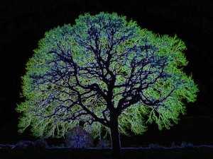 Glowing-tree